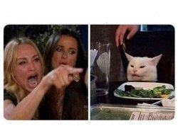 Cat Meme Templates Imgflip