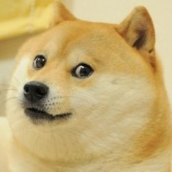 Graduate Dog Meme Generator Imgflip Funny Animal Pictures