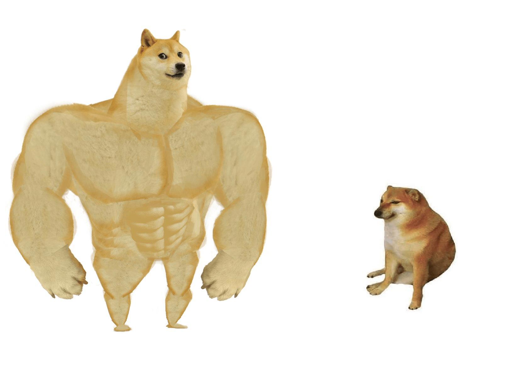 Big Dog Small Dog Memes