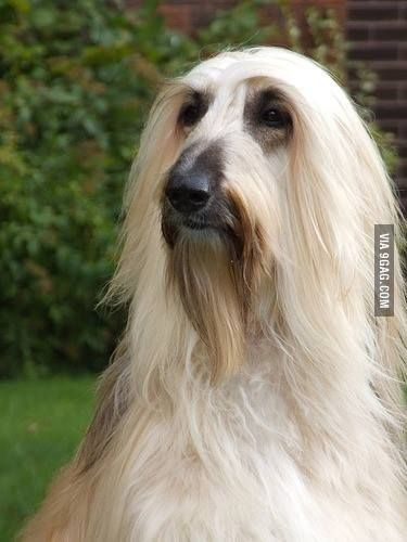 Saruman Dog Blank Template Imgflip