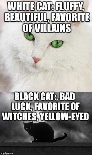Cats Can Be Racist Too Imgflip