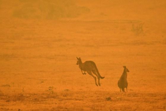 - ΕΙΚΟΝΕΣ AFP ΤΟΥ ΕΤΟΥΣ 2020 - Ένα καγκουρό πηδά σε ένα πεδίο μέσα σε καπνό από πυρκαγιά στη χιονισμένη κοιλάδα στα περίχωρα της Cooma στις 4 Ιανουαρίου 2020. - Κλήθηκαν έως και 3.000 στρατιωτικοί εφεδρείες για να αντιμετωπίσουν την αδιάκοπη κρίση της Αυστραλίας. στις 4 Ιανουαρίου, καθώς δεκάδες χιλιάδες κάτοικοι εγκατέλειψαν τα σπίτια τους σε καταστροφικές συνθήκες.  (Φωτογραφία από SAEED KHAN / AFP) (Φωτογραφία από SAEED KHAN / AFP μέσω Getty Images)