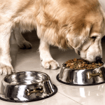 Best Dog Fool Bowls In 2019 Our Pets Gpet Outward Hound And More Business Insider