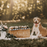 Before And After Photo Shoot Of Pregnant Pit Bull And Puppies Insider