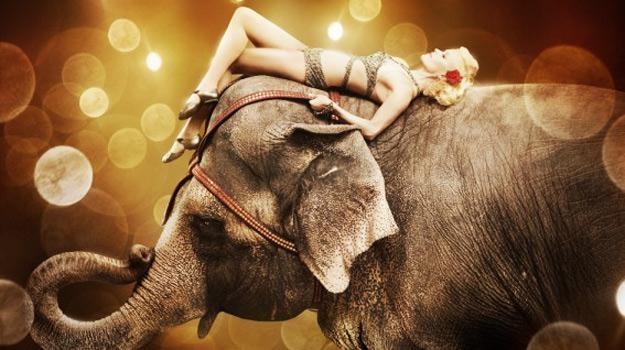 Znalezione obrazy dla zapytania woda dla słonia