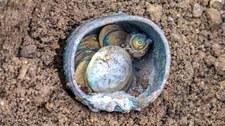 W Izraelu odkopano garniec złotych monet