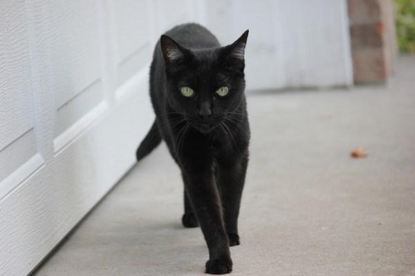 Đạo Ki tô giáo quan niệm rằng loài mèo mang lại những điều xui xẻo.