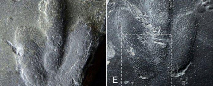 Hình ảnh dấu chân khủng long mới được phát hiện.