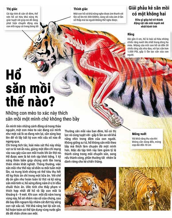 Cách hổ săn mồi
