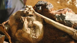 The skeleton of the 'Little Foot' reveals a human relative rocking through the trees