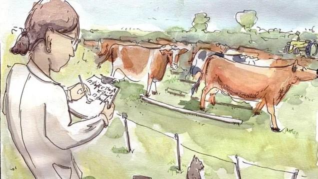0a1df56c8b0d88e1a767aa1305ce0a8f Scientists Gave Sober Cows a Drunk Walking Test | Gizmodo