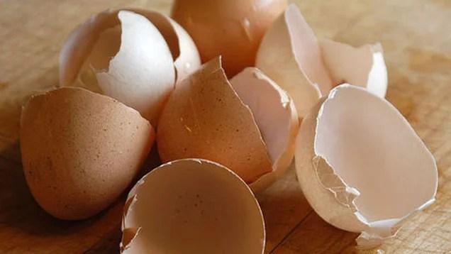 Eggshells as Organic Pest Control (2/2)