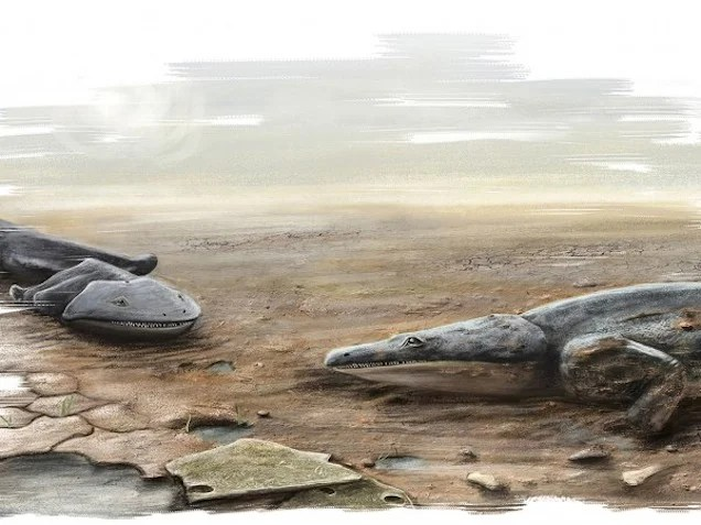 Car-Sized Salamander Fossils Found In Mass Grave In Portugal