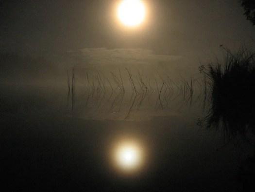 Resultado de imagen de moonlight