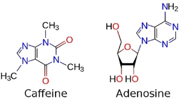 Image result for caffeine adenosine
