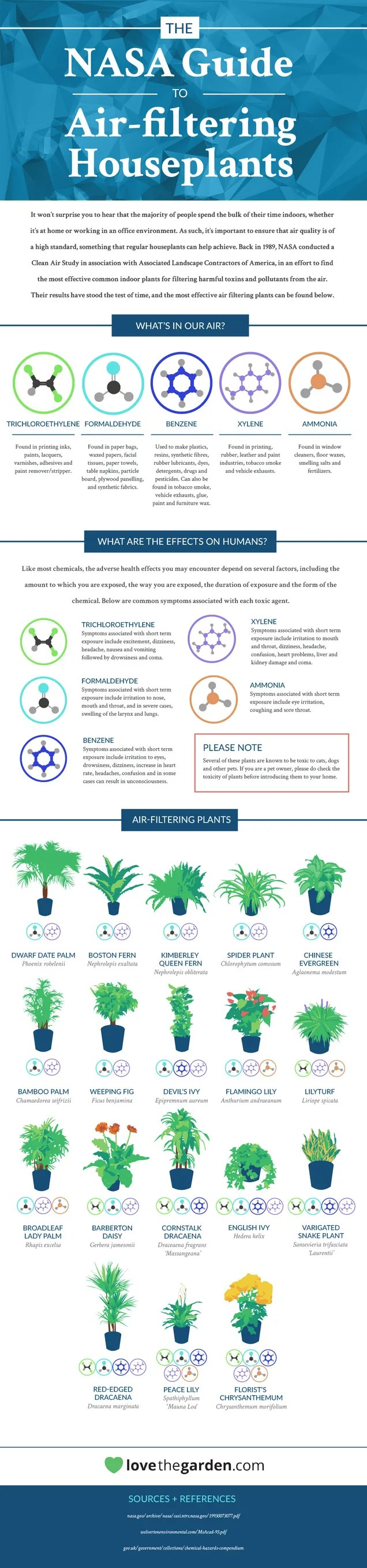This Graphic Shows the Best Air-Cleaning Plants, According to NASA