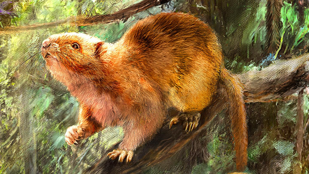 qmrijldbeunlmfrr1cye Bones of Extinct Giant Cloud Rats Found in Philippine Cave | Gizmodo
