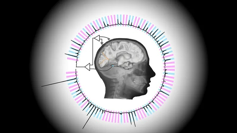 New Technique Allows Scientists to Read Minds at Nearly the Speed of Thought