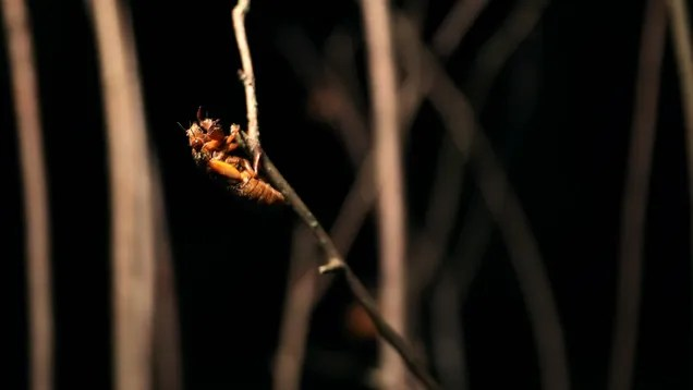 93ebb230abcdd0b5d9dcb7cdc8eb1822 How I Stopped Worrying and Learned to Love—or at Least Tolerate—the Cicadas   Gizmodo