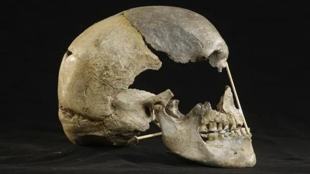 prt3u0hn8id6dzm0j8vj Skull From Czech Cave May Contain Oldest Modern Human Genome   Gizmodo
