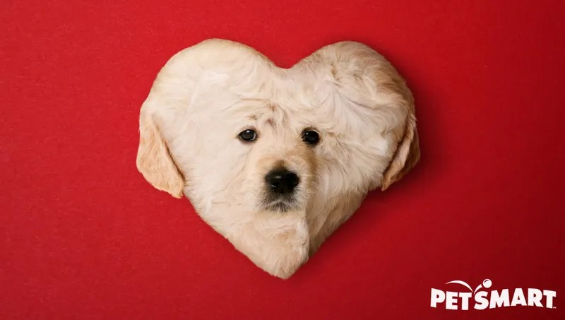 PetSmart Introduces Heart Shaped Puppy For Valentines Day