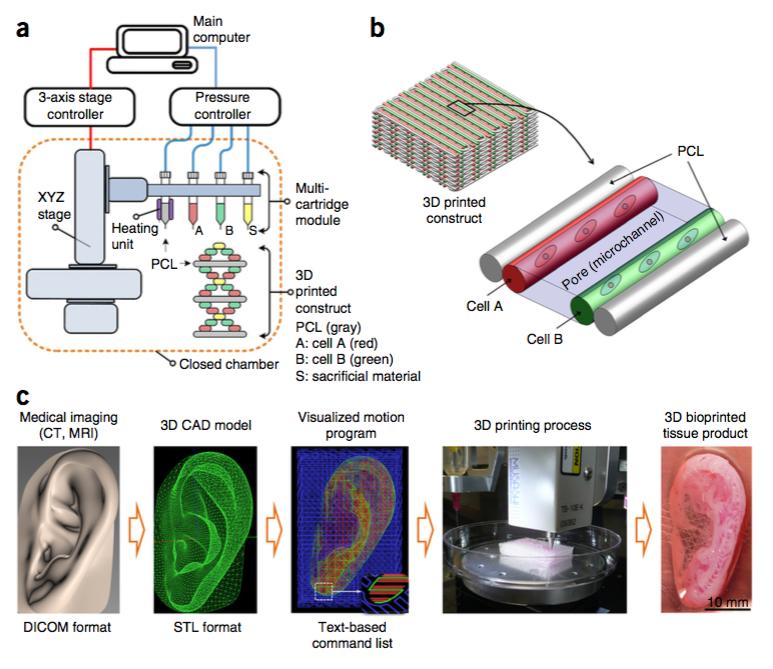 Scientists Just 3D Printed a Transplantable Human Ear