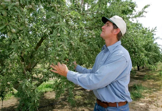 How the Drought Is Devastating California's #1 Food Export: Almonds