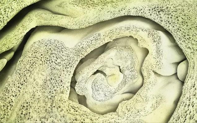 El mundo visto bajo el microscopio parece ciencia-ficción