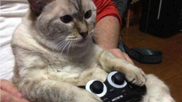 Cats Are Very Serious About Video Games Kotaku Australia