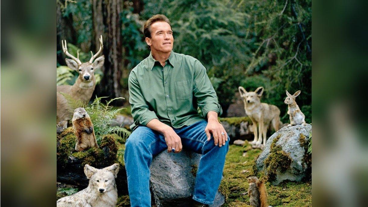 Arnold Schwarzenegger Imgflip
