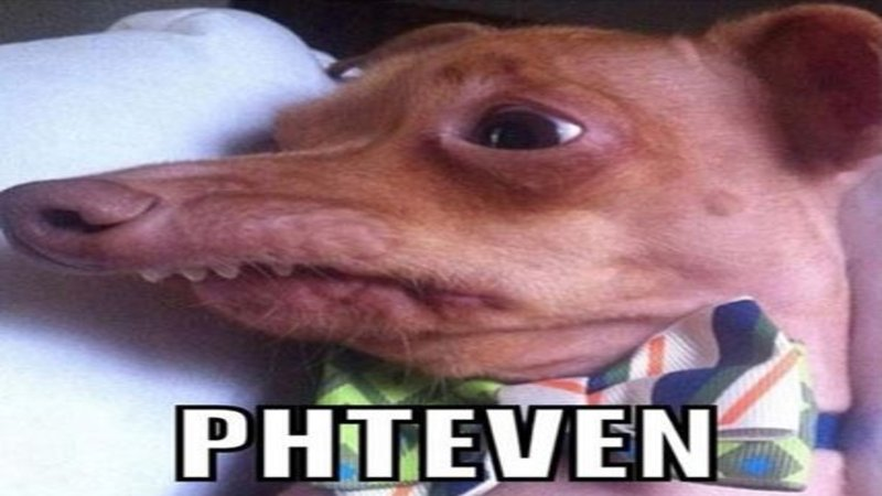 Phteven Tuna The Dog Know Your Meme