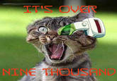 ITS OVER NINE THOUSAND Vegeta Cat Goku cat mammal photo caption small to medium sized cats cat like mammal fauna whiskers