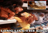 Does It Move The Lion King Know Your Meme