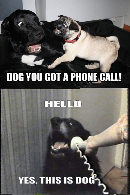 Hello Yes This Is Dog Imgur