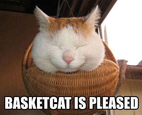 BASKETCAT IS PLEASED cat small to medium sized cats whiskers cat like mammal photo caption