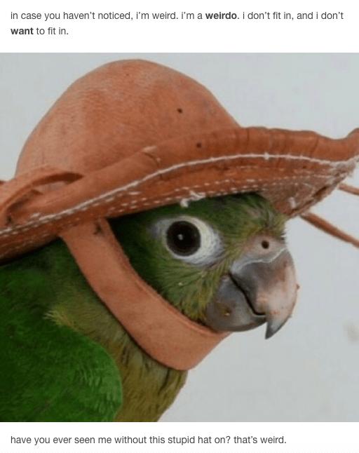 Stupid Hat Jughead S I M Weird Speech Know Your Meme