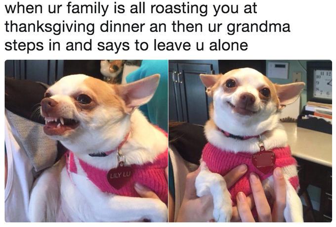 413 Humorous Dog Memes For Gleeful Time
