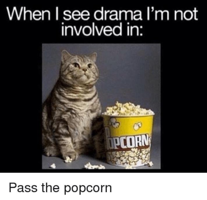 Popcorn cat   Cats   Know Your Meme