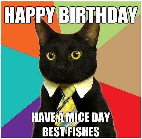 Happy Birthday From Business Cat Business Cat Know Your Meme