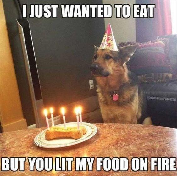 German Shepard Bemoaning His Birthday Cake Being On Fire Happy Birthday Memes Know Your Meme