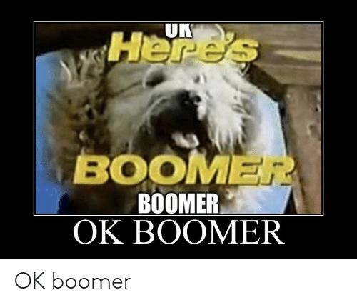 UK Here's BOOMER BOOMER OK BOOMER OK boomer Dog breed Dog Mammal Canidae Photo caption Shih tzu Carnivore Snout Terrier Old english sheepdog