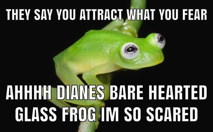 THEY SAY YOU ATTRACT WHAT YOU FEAR AHHHH DIANES BARE HEARTED GLASS FROG IM SO SCARED Vertebrate Amphibians Frog Tree frog Amphibian Hyla Shrub frog Toad Adaptation Squirrel tree frog Organism Photo caption True frog
