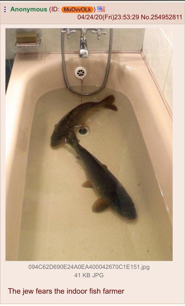 : Anonymous (ID: MuOvvOLK ) 04/24/20(Fri)23:53:29 No.254952811 094C62D690E24A0EA400042670C1E151.jpg 41 KB JPG The jew fears the indoor fish farmer Fluid Plumbing fixture Property Photograph Vertebrate White Fish Black Sink Plumbing Beige Bathroom accessory Bathroom Tap Composite material Snapshot