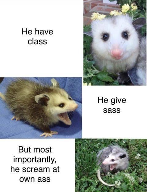 He have class He give sass But most importantly, he scream at own ass Nose Photograph Vertebrate Organism Mammal Iris Fawn Adaptation Snout