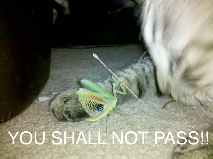 You Shall Not Pass Pictures Of Gandalf The Grey You Shall Not