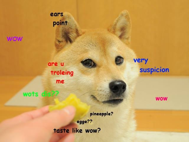Do Not Want Doge Know Your Meme