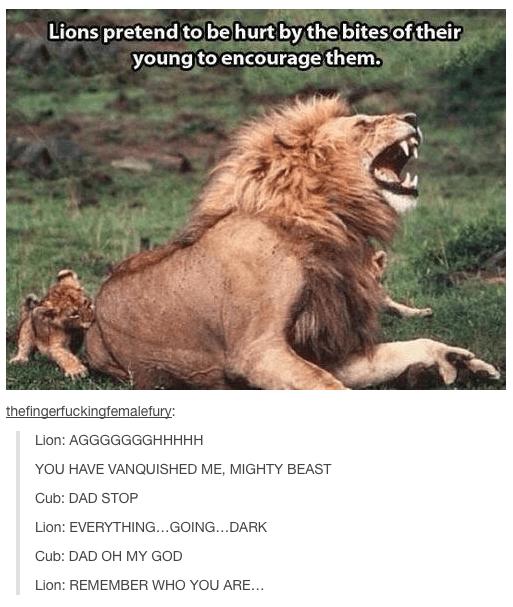 Lion Cub Hanging With Mom Lion Meme On Me Me