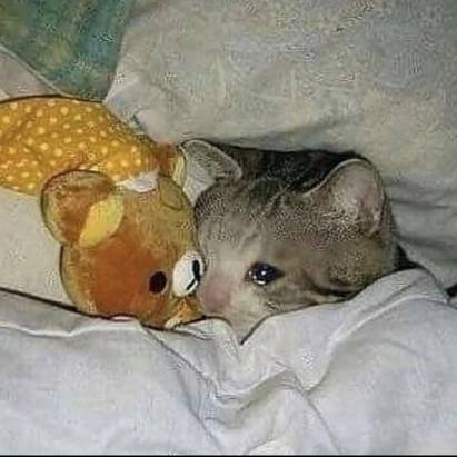 Image result for crying in bed meme