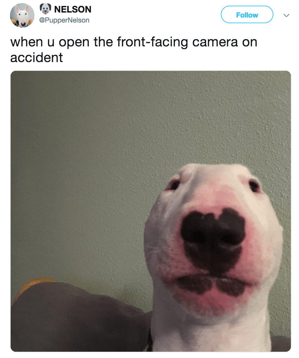 Dog Sitting Solutions For When You Re Away Cute Memes Cute
