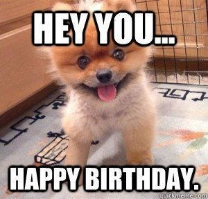 Small Dog Wishes Wants Your Attention To Wish It Happy Birthday Happy Birthday Memes Know Your Meme